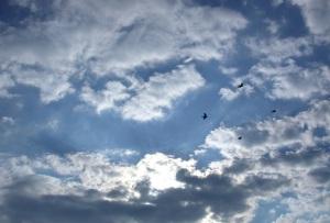 four-birds-1550542-638x432