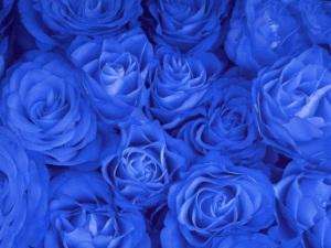 roses-1313128-640x480