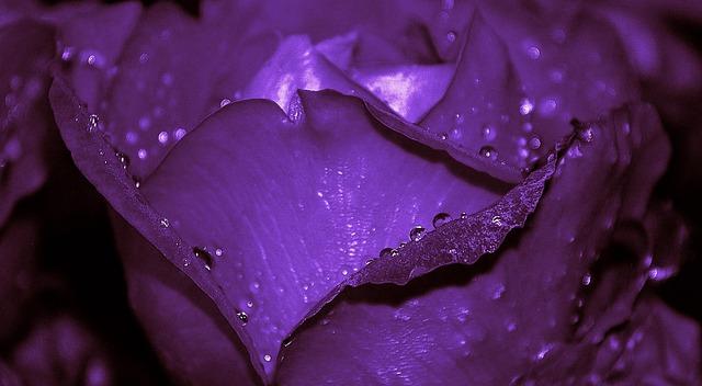 roses-215237_640
